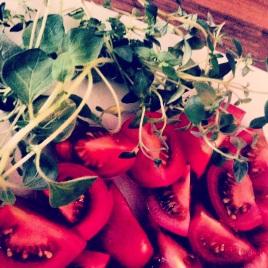 tomatoes,oregano,thyme